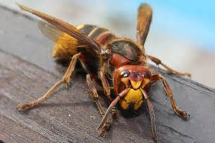 penis insect torture picture 3