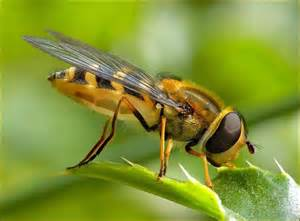 insect picture 1