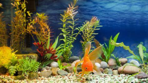 aquarium health picture 1
