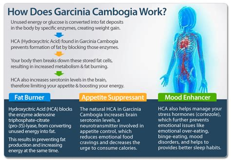 why can't you use garcina cambogia if you picture 4