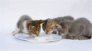 lack of appetite in cats picture 6
