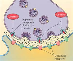 natural dopamine blockers picture 2