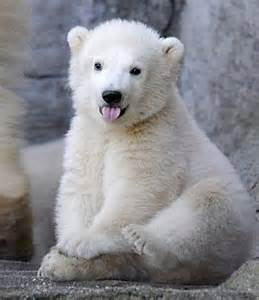 bears and small tumblr picture 7