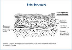 structure of the skin graphs picture 18