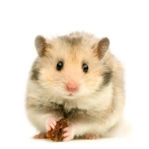 hamster h picture 14