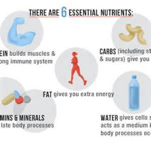 7 essential nutrients needed as part of a picture 6