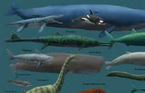 pictures of prehistoric shark h picture 1