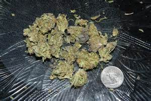 what does weed look like picture 1
