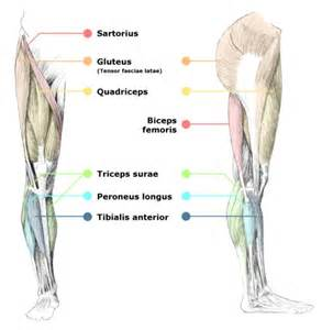 leg muscle pain picture 6