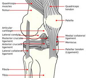 diagram of a knee joint picture 10