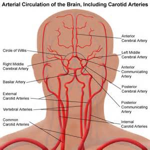 blood circulation discover picture 2