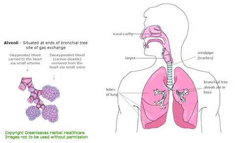 herbs for mucus removal picture 1