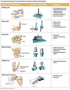 types of joints picture 2