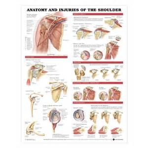 shoulder picture 11
