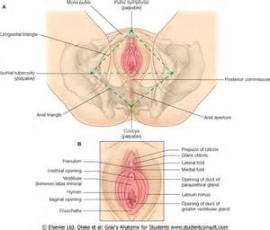 lymph node swelling and hemorrhoids picture 2