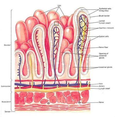 gastrointestinal tract activities picture 13