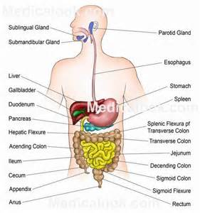 gastointestinal cleansing picture 7
