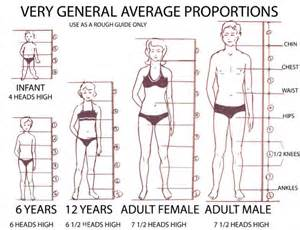 what is the length of a female human picture 19
