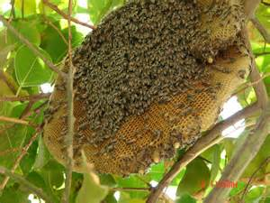 pictures of bee hives and bees picture 2