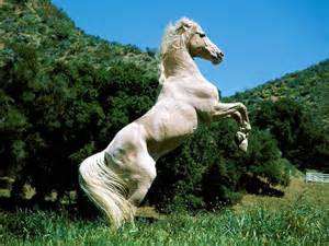 herbal equine picture 6
