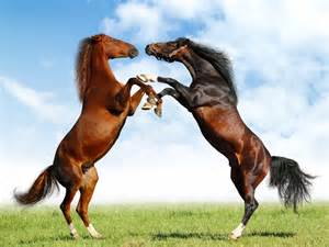 equine herpes picture 1