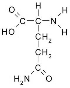 l glutamic acid for digestion picture 6