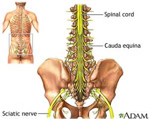 el movements and back pain picture 5