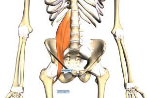 iliopsoas muscle picture 10