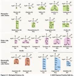 how long does it take amino acids to picture 1