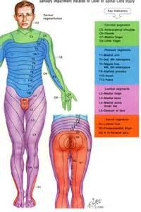 bulging bladder picture 7