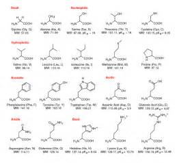 amino acids muscle picture 10