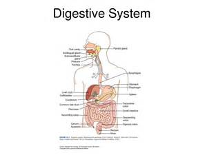 gastrointestinal illnesses household related picture 1