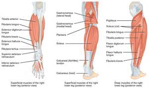 lower leg muscle pain picture 9