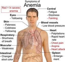 how does hypothyroidism cause anemia picture 2
