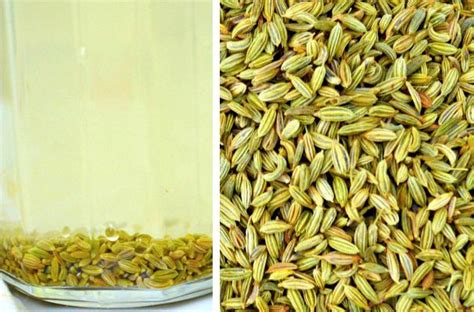 fennel seeds weight loss picture 15