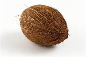 coconut picture 3