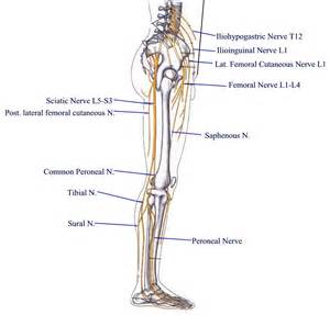 muscle injury leg picture 2