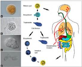 treatment for vaginal bacterial infection picture 13