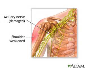 muscle never damage picture 17