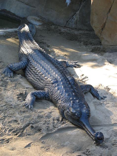 mutant en grows alligater h picture 10