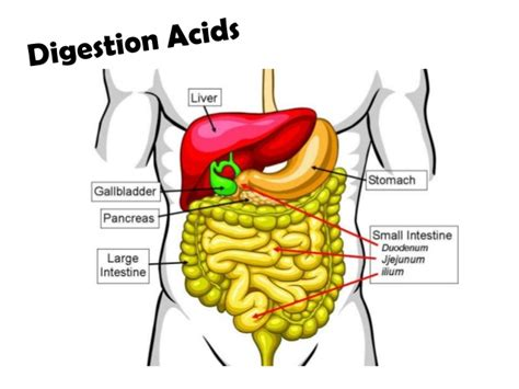 digestion chemicals picture 7