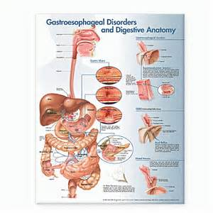 3 digestive disorders picture 7