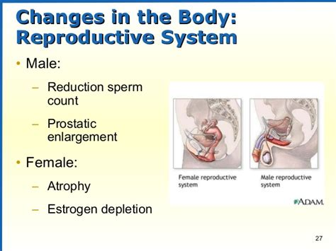 aging of the reproductive system picture 21