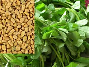 fenugreek picture 17