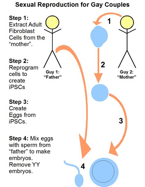 cell skin reproduction picture 2