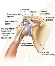 descriptive muscle terminology picture 9