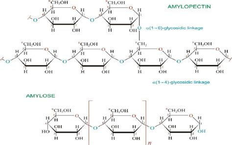 chemical structure of starch picture 17