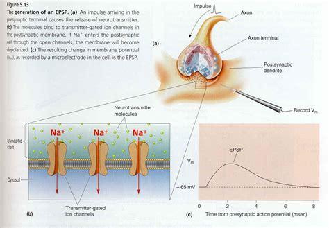aminoacids acne treatment picture 9