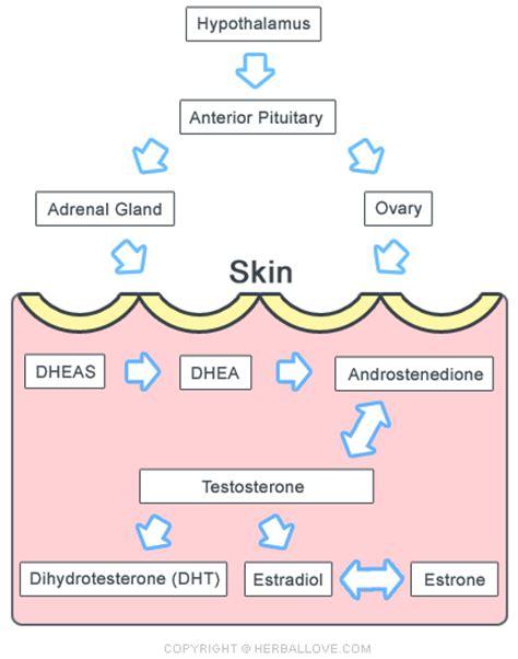 natural testosterone acne picture 15