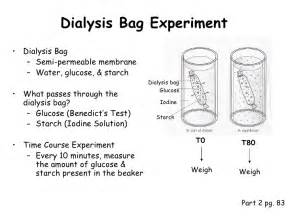 dialysis experiments with iodine and starch picture 14
